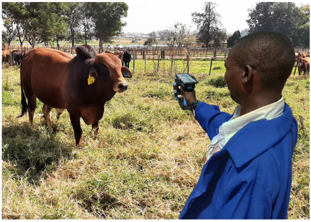 E-Livestock Global Launches Blockchain-Based Mastercard Solution to Bring Visibility to Zimbabwe's Livestock Industry